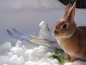 ウサギの雪遊び