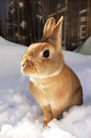 ウサギのくんくん