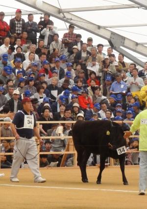 第10回全国和牛能力共進会 長崎
