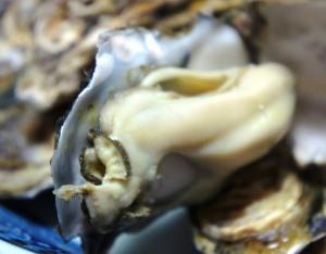牡蠣の効果