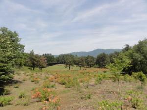 兎和野高原